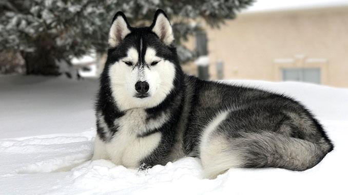 Переохлаждение у собаки фото