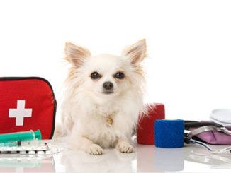 Домашняя ветеринарная аптечка для собаки