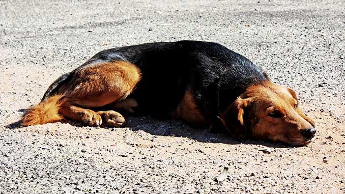 Собака потерялась и убежала фото