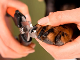 Стрижем собаке когти фото