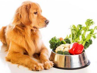 Как и чем правильно кормить собаку
