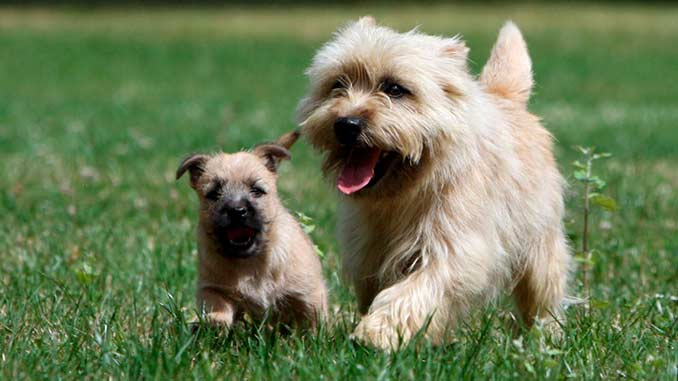 Собака для ребенка: лучшие породы для детей, рекомендации 27