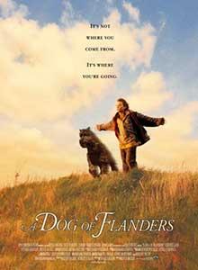 40-Фландрийский-пес