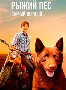 64-Рыжий-пес-Самый-верный