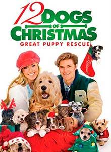 95-12-рождественских-собак2
