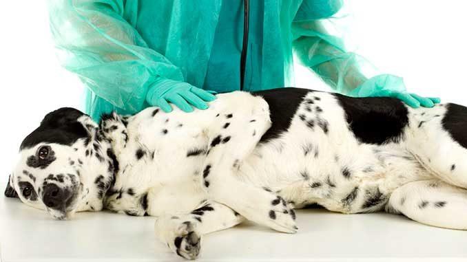 Панкреатит у собак фото
