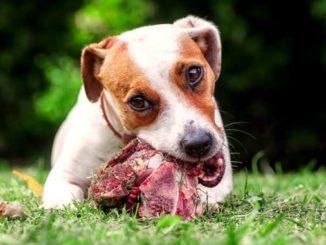 Мясо для собак фото