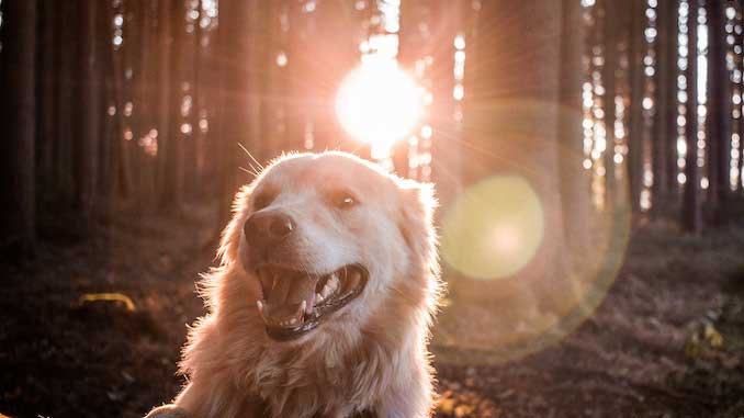 Педигри - корм для собак