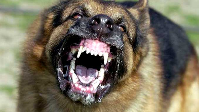 Самые опасные породы собак с фото